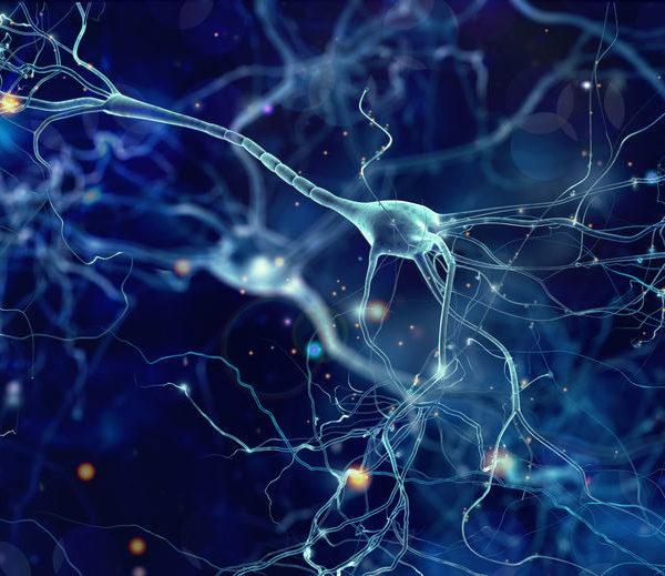 Catalyseur de transformation® | Notre actualité - Le système nerveux et la pleine conscience